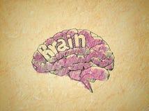 Hjärna Arkivfoton