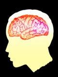 hjärna Fotografering för Bildbyråer