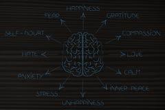 Hjärna som omges av listan av mänskliga sinnesrörelser arkivbild