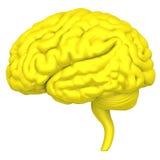 Hjärnan är en närbild som isoleras på vit bakgrund Arkivbilder