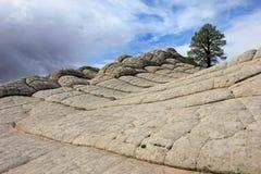 Hjärnan, ett vaggabildande på vitfacket, prärievargButtes södra CBS, Vermillion klippor vildmark, Arizona för Paria kanjon Royaltyfria Bilder
