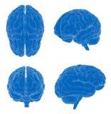 hjärnhuman vektor illustrationer