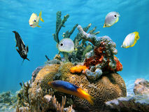 Hjärnkorall med färgrika den havssvampar och fisken Royaltyfri Fotografi