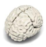 Hjärnmodell Fotografering för Bildbyråer