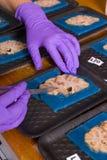 Hjärnundersökning i labb arkivfoto