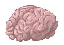 Hjärnvektorillustration Arkivbilder