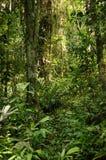 Hjärta av Afrika den tropiska rainforesten, Kongofloden arkivfoto