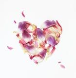Hjärta av purpurfärgade och rosa kronblad av blommor på vit bakgrund Arkivfoton