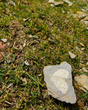 Hjärta av stenen Royaltyfri Fotografi