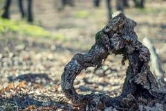 Hjärta av trä i natur Arkivbilder