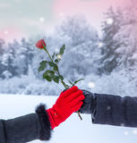 Hjärta för två rosa färg valentin för dag s Arkivfoton
