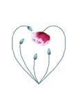 Hjärta för vattenfärgvallmoblomma på vit bakgrund Royaltyfri Foto