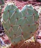 Hjärta formad kaktus för prickly pear Arkivbild