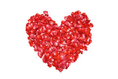 Hjärta formad röd ros royaltyfri fotografi