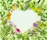 Hjärta-formad ram med att läka växter royaltyfria bilder
