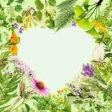 Hjärta-formad ram med att läka växter royaltyfri foto