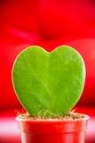 hjärta formad tree Royaltyfria Bilder