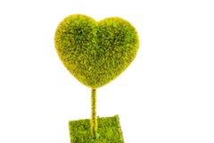 Hjärta-Formad Tree Royaltyfria Foton