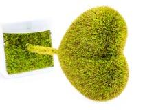 Hjärta-Formad Tree Arkivfoto