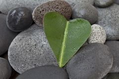 Hjärta format blad på kiselstenen arkivbild