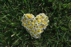 Hjärta från blommor på gräset Arkivfoto