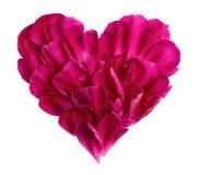 Hjärta från kronbladen av en blomma royaltyfria bilder