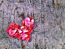 hjärta från patels Royaltyfri Fotografi