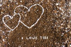 Hjärta från snäckskalbakgrund arkivbilder