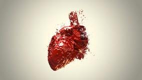 Hjärta fyllt blod Arkivbild