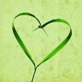 Hjärta med grässtrån, tapet Royaltyfria Bilder