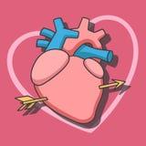 Hjärta med pilen Stock Illustrationer