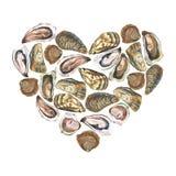 Hjärta med vattenfärgostron på vit Royaltyfria Bilder