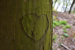 Hjärta på ett träd Royaltyfri Fotografi