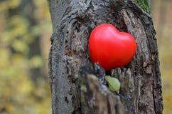 Hjärta på trädet Arkivbild