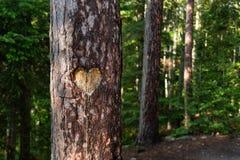 Hjärta sned in i trädstammen i skog royaltyfri foto