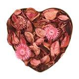 Hjärta som fylls med medleypotpurri royaltyfria foton