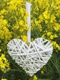 Hjärta som göras av gnäggandet som hänger i ett rapsfröfält Royaltyfria Foton