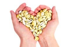 Hjärta som göras av skal i hans händer Arkivbilder
