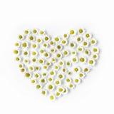 Hjärta som göras med vita kamomillar på vit bakgrund Arkivfoton