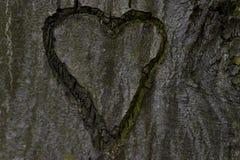 Hjärta som snidas i ett träd Arkivfoto