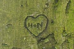 Hjärta som snidas i träd Royaltyfri Foto