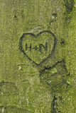 Hjärta som snidas i träd Arkivbilder
