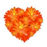 Hjärtaform av den orange gerberaen Arkivbild