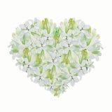 Hjärtaform av den vita tuberosen Royaltyfri Foto