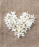 Hjärtaform för vita blommor som gifta sig valentinbegrepp Arkivbilder