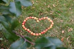 Hjärtaform som göras med crabapples Royaltyfria Foton