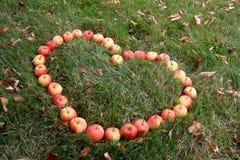 Hjärtaform som göras med crabapples Royaltyfri Foto