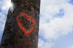 Hjärtaformkontur som målas med röd målarfärg på begrepp för valentin för förälskelse för trädinloggning romantiskt Arkivfoto