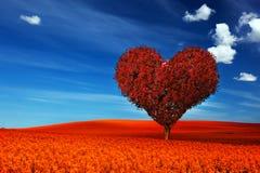 Hjärtaformträd med röda sidor på blommafält Förälskelse royaltyfri illustrationer