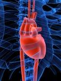 hjärtahuman royaltyfri illustrationer